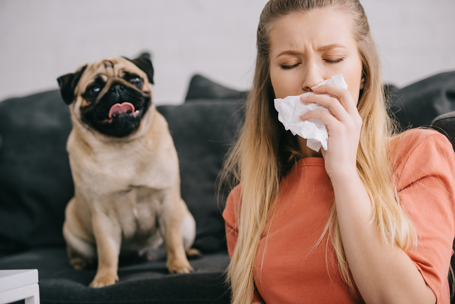 Dog making lady sneeze because of allergies